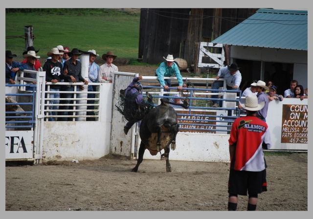 bull rider and bull