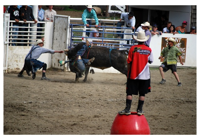 rodeo clown helps rider