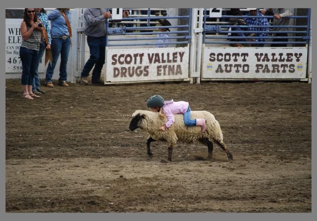 sheepcute
