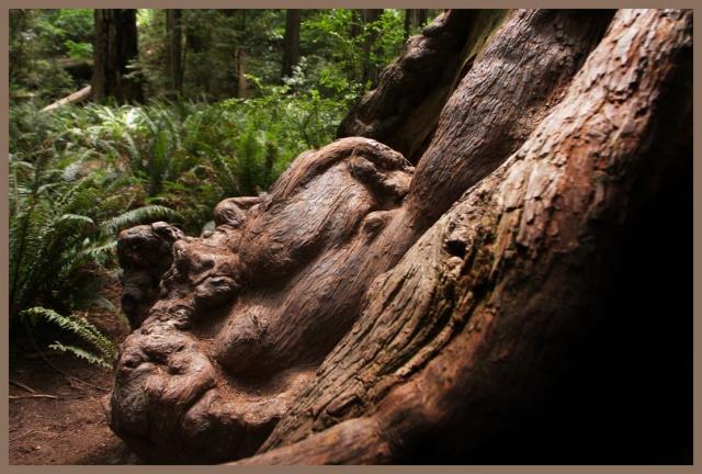 redwooddreamface