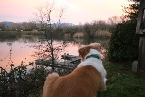 dog resting at pond